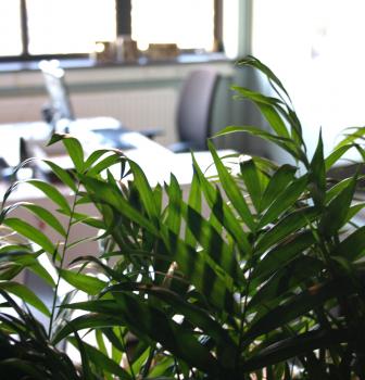 Welke rol speelt groen bij een gezonde inrichting van uw kantoor?